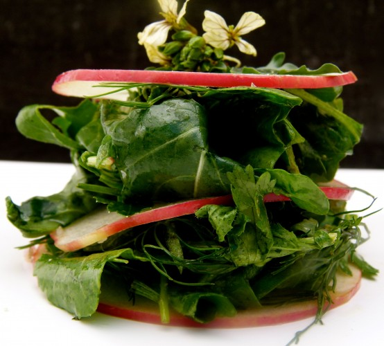 arugula, herb and apple mille-feuille