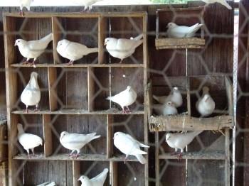 McGrath Family Farm Chickens