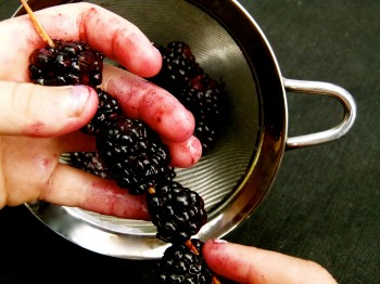 Hunger Games Recipes  roasted blackberries on a vanilla bow