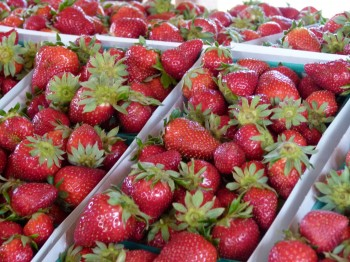 McGrath Family Farm strawberries
