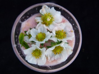 coconut mango smoothie by chef morgan with garnish of flowers
