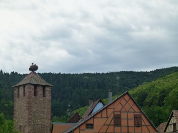 rooftops in alsace france