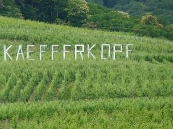 vineyard in alsace france kaefferkopf