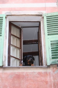 dog out of a window in Nice France