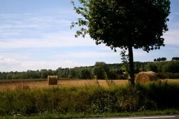 Normandie: Omaha Beach tree and hay rolls