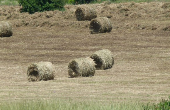 Chef Morgan hay rolls France