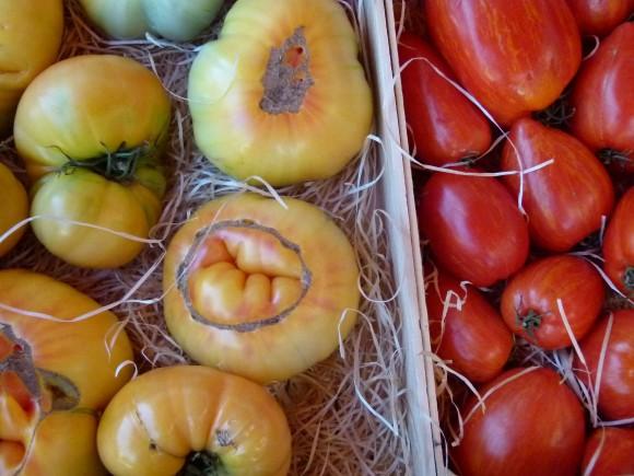 Chef Morgan Tomatos