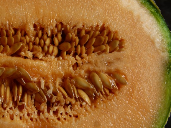 L'Isle-sur-la-Sorgue melons