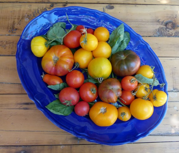 heirloom tomatoes  chef morgan