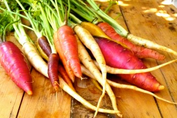 multi colored carrots on table