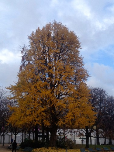 Golden leaves on a majestic tree in france paris