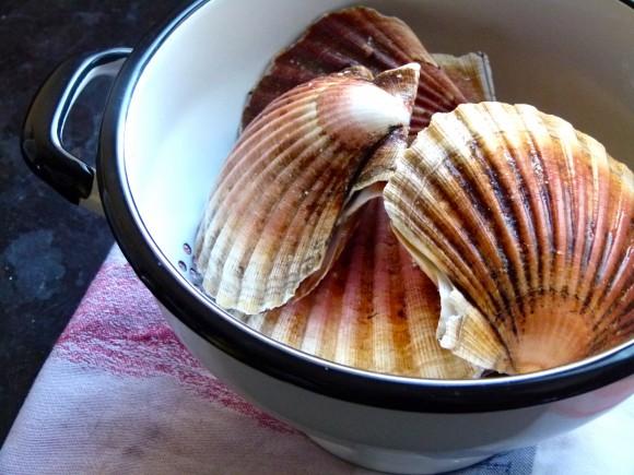 scallops in colander