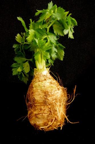 "celeraic bulb  or ""celery root"""