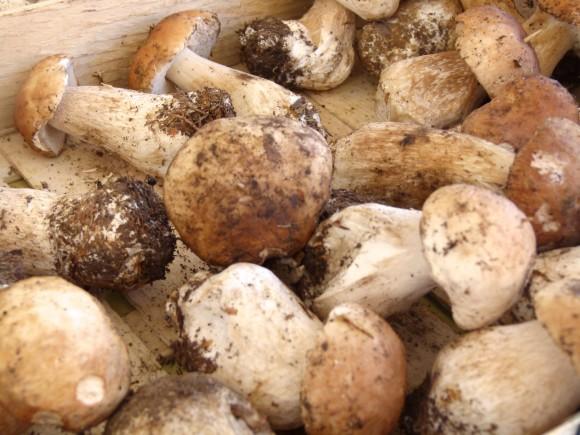 chef morgan mushrooms