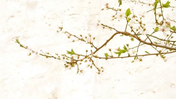 chef morgan spring tree