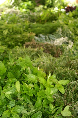 chef morgan herbs